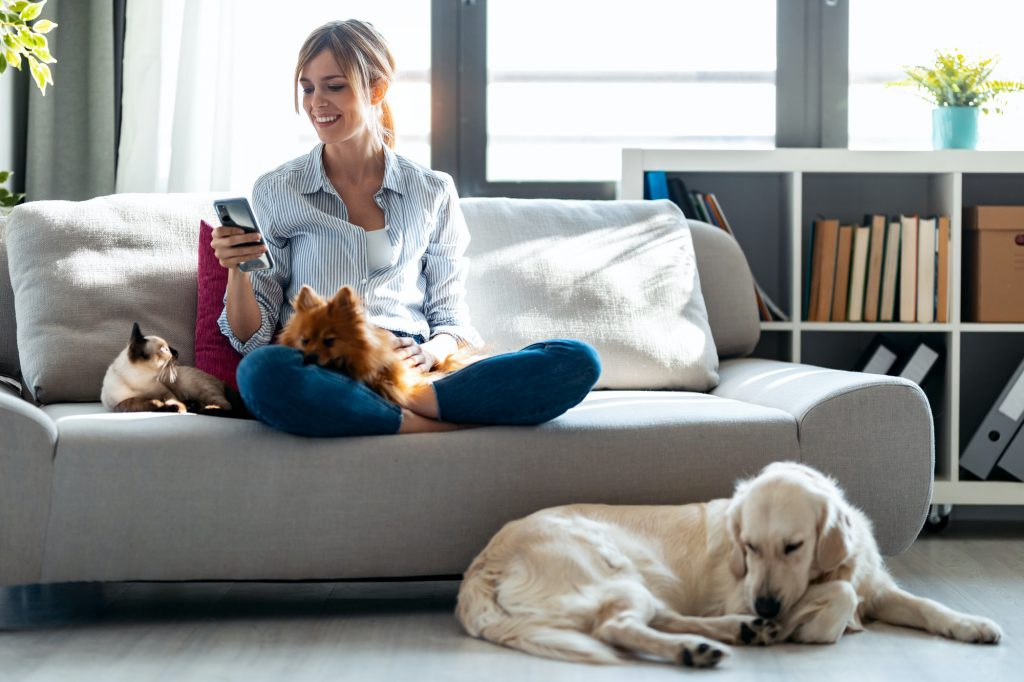 Attractive young woman using mobile phone while sitting in couch with her dogs and cat at home.
